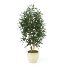 <strong>Distinctive Designs</strong> Dracaena Reflexa Anita Tree in Planter