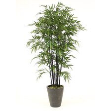 "96"" Bamboo Tree in Medium Stoneware Planter"