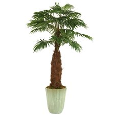 "96"" Fan Palm in Large Fluted Stoneware Planter"