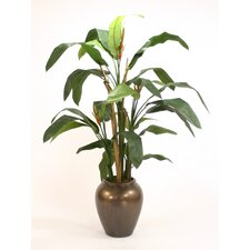 Heliconia Tree in Planter