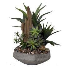 Faux Succulent Gardent II Desk Top Plant
