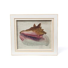 Seashell Framed Art