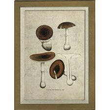 Mushroom III Framed Graphic Art
