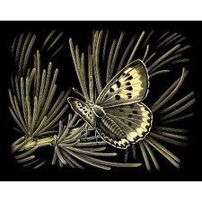 Oasis Butterfly Scraperfoil