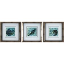 Coastal Shell 3 Piece Framed Graphic Art Set