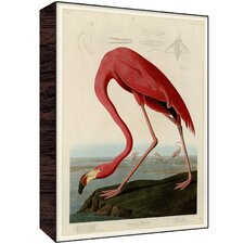 Flamingo IV Wall Art