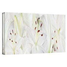 'Lily Landscape' by Cora Niele Photographic Print on Canvas