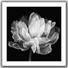 'Tulipa Double Black and White II' by Cora Niele Canvas Poster