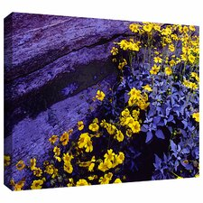 'Desert Sunflower Dusk' by Dean Uhlinger Gallery-Wrapped Canvas Art
