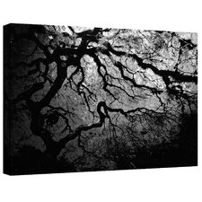 ''Ying and Yang Tree'' by John Black Photographic Print Canvas
