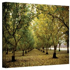 ''Fall Orchard'' by Kathy Yates Photographic Print on Canvas