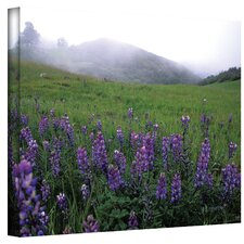 ''Figueroa Mountain with Fog'' by Kathy Yates Photographic Print on Canvas