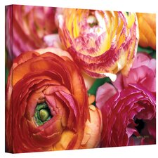 ''Ranunculus Close Up'' by Kathy Yates Photographic Print on Canvas