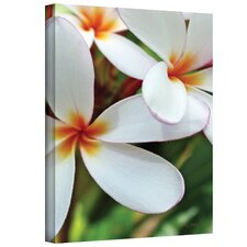Kathy Yates ''White Plumeria'' Canvas Art