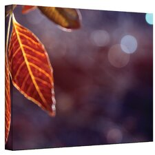 ''Fall Lights'' by Mark Ross Photographic Print on Canvas