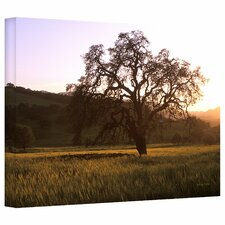 'Golden Hour' by Kathy Yates Photographic Print on Canvas