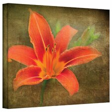 David Liam Kyle 'Flowers in Focus IV' Gallery-Wrapped Canvas Wall Art