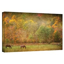 'Pasture' by David Liam Kyle Photographic Print on Canvas
