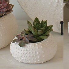 Ceramic Urchin Decorative Bowl