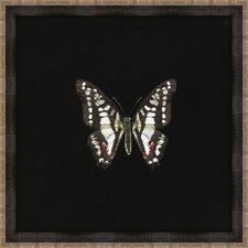 Butterflies III Framed Art in Black