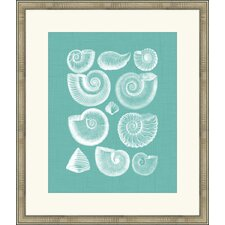 <strong>Melissa Van Hise</strong> Colorful Shells I Wall Art