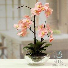 "21"" Phaleanopsis Orchid in Glass Bowl"