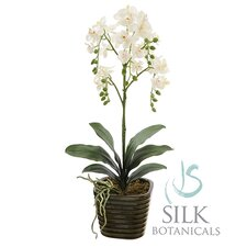 """22"""" Potted Orchid in Ceramic Pot"""