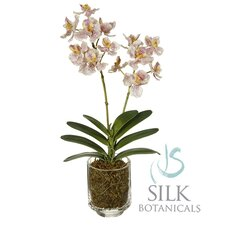"""17"""" Cattleya Orchid in Glass Cup"""