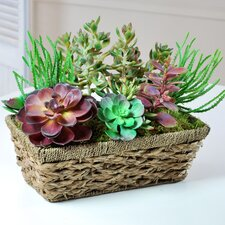 Succulent Window Box in Straw Planter
