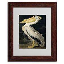 John James Audubon 'American White Pelican' Framed Art