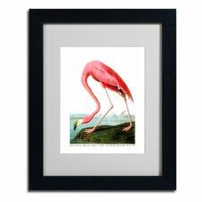 John James Audubon 'American Flamingo' Matted Framed Art
