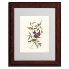 John James Audubon 'Louisiana Tanager' Matted Framed Art