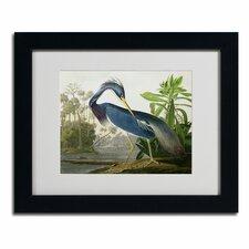 John James Audubon 'Louisiana Heron' Matted Framed Art