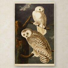 """""""Snowy Owl"""" Canvas Art"""