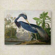 John James Audubon 'Louisiana Heron' Canvas Art