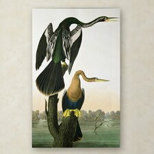 John James Audubon 'Black-Billed Darter' Canvas Art
