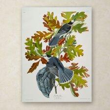 John James Audubon 'Canada Jay' Canvas Art