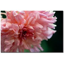 """Pink Dhalia"" by Kurt Shaffer Photographic Print on Canvas"