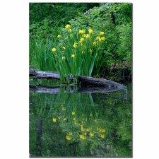 'Wild Iris Reflections II' by Kurt Shaffer Photographic Print on Canvas