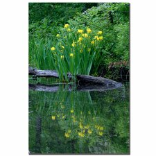 "<strong>Trademark Fine Art</strong> Wild Iris Reflections II by Kurt Shaffer, Canvas Art - 24"" x 16"""