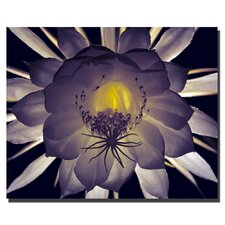 "<strong>Trademark Fine Art</strong> Floral Contrast by Kurt Shaffer, Canvas Art - 24"" x 36"""