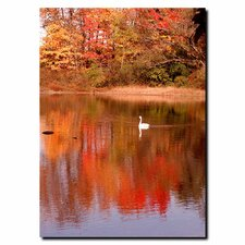 "<strong>Trademark Fine Art</strong> Autumnal Swan by Kurt Shaffer, Canvas Art - 32"" x 24"""