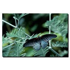 "<strong>Trademark Fine Art</strong> Tropical Butterfly by Kurt Shaffer, Canvas Art - 24"" x 32"""