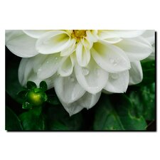 "<strong>Trademark Fine Art</strong> White Dahlia by Kurt Shaffer, Canvas Art - 35"" x 47"""