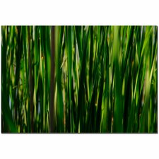 'Prairy Grass II' by Kurt Shaffer Photographic Print on Canvas