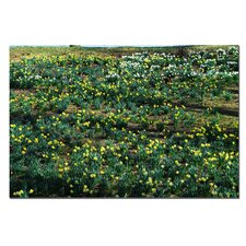 "<strong>Trademark Fine Art</strong> Daffodil Hill II by Kurt Shaffer, Canvas Art - 16"" x 24"""