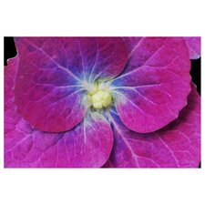'Hydrangea Closeup' by Kurt Shaffer Photographic Print on Canvas