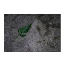 "<strong>Trademark Fine Art</strong> Just a Leaf on a Rock by Kurt Shaffer, Canvas Art - 16"" x 24"""
