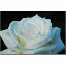 'White Rose Beauty 2' by Kurt Shaffer Photographic Print on Canvas