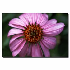 'Purple Daisy' by Kurt Shaffer Photographic Print on Canvas